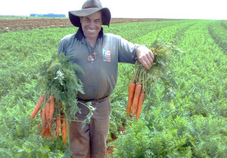 potencial produtivo cenouras seminis no campo