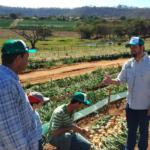 O RTV Seminis, Rafael Teixeira, apresenta as características da cebola Duster aos produtores