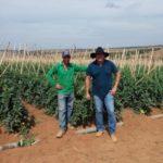 Seminis realiza visita técnica aos campos de Tomate Compack em Goiás
