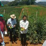 Vendedores de parceiro comercial da Seminis recebem treinamento sobre tomate Coronel SVTH0361