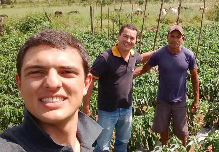 Excelentes resultados do pimentão SV1634PH em Taquara, Planaltina DF
