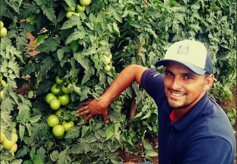 Produtor do RS exibe os resultados do tomate em sua lavoura