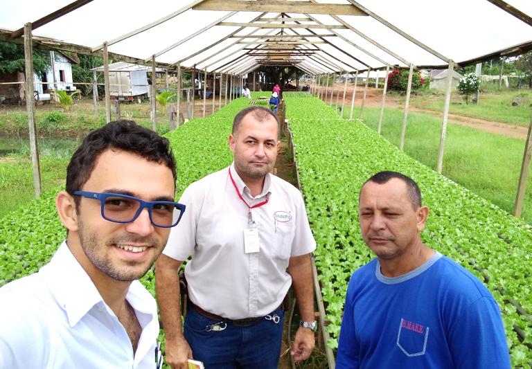 Desempenho da Alface Lucy Brown em propriedade de Rondônia