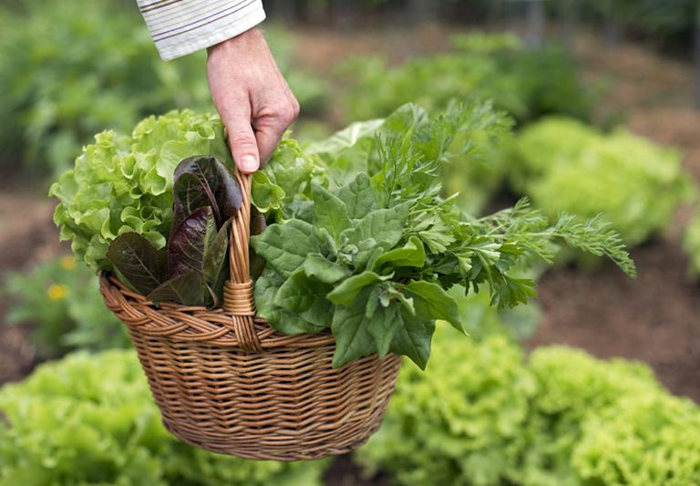 Seminis participa da campanha AlimentAção + Salada da ABCSEM sobre conscientização do consumo de hortaliças